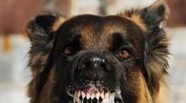 Nam giáo viên ở Nghệ An tử vong nghi mắc bệnh dại từ chó thả rông cắn
