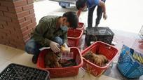 7 cá thể hổ con về Vườn quốc gia Pù Mát đã hồi phục