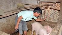 Yên Thành yêu cầu người dân không bán chạy lợn bệnh