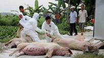 Nghệ An hỗ trợ người chăn nuôi bị thiệt hại do dịch tả lợn châu Phi