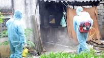Nghệ An chi trên 12 tỷ đồng phòng, chống dịch tả lợn châu Phi