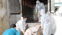 Nghệ An hỗ trợ 5 tỷ đồng cho người dân có lợn bị tiêu hủy do dịch
