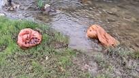 Công an điều tra vụ vứt hàng chục bao tải lợn chết xuống sông ở Nghệ An