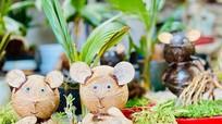 Dừa bonsai hình chuột đặc biệt 'hút' khách