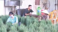 Nghệ An: Rau xanh hạ giá mạnh do ảnh hưởng dịch Covid-19