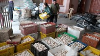 Nghệ An: Trứng vịt giảm sát đáy vẫn khó tiêu thụ