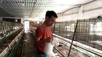 Nông dân nuôi thỏ bán thẳng qua Nhật, thu tiền tỷ mỗi năm