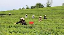 Tìm ra lợi thế từng vùng để định hướng sản xuất nông nghiệp