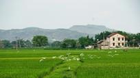 Cần xây dựng một làng quê xứ Nghệ 'thuần chất Nghệ'