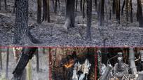 Cận cảnh hoang tàn sau cháy rừng ở Nam Đàn