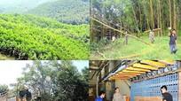 Nghệ An xây dựng khu nông nghiệp ứng dụng công nghệ cao về lâm nghiệp