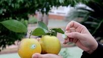 Nghệ An: Xác định đúng cây con chủ lực để tái cơ cấu nông nghiệp
