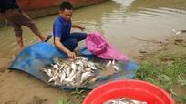 Chưa xác định được nguyên nhân cá chết bất thường trên sông Con