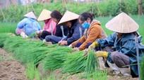 BHXH Việt Nam đề xuất tăng mức hỗ trợ đóng BHXH tự nguyện và BHYT