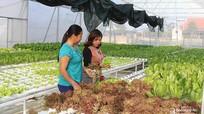 Nghệ An: Sẽ hỗ trợ đến hàng tỷ đồng cho doanh nghiệp đầu tư vào nông nghiệp