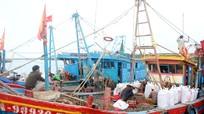 Ngư dân Nghệ An 'đút túi' tiền triệu mỗi ngày từ xuất khẩu ốc xoắn