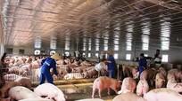 Bộ trưởng Nông nghiệp cho biết lý do vì sao giá thịt lợn vẫn đắt đỏ