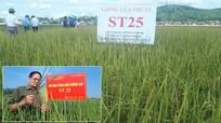 Giống lúa gạo ngon nhất thế giới đã được trồng ở Nghệ An