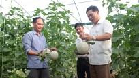 Nghi Lộc ứng dụng công nghệ cao vào sản xuất nông nghiệp
