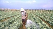 Trồng rau an toàn với thuốc trừ sâu sinh học
