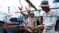 Đánh bắt sam - nghề mới ở Quỳnh Phương