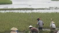 Phó Chủ tịch UBND tỉnh Đinh Viết Hồng kiểm tra tình hình mưa lụt tại Yên Thành, Hưng Nguyên