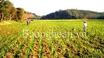 Dồn điền, đổi thửa, tạo đà xây dựng nông thôn mới ở Hùng Sơn