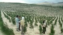 Hợp tác quốc tế về lâm nghiệp vì sự phát triển bền vững của Việt Nam