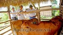 """""""Lục lạc vàng"""" đến Quang Phong"""