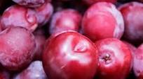 Cao Bằng phục tráng nhiều giống cây ăn quả đặc sản
