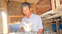 Thu nhập cao nhờ nuôi thỏ