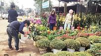 Cần xây dựng chợ hoa, cây cảnh