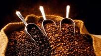 Doanh nghiệp mua cà phê giá thấp để tạm trữ