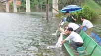 Thả 0,7 tấn cá giống vào lòng hồ thủy điện Hủa Na (Quế Phong)