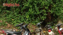 Lâm tặc chặt phá rừng Pu Lon (Tây Sơn- Kỳ Sơn)