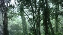 Công bố QĐ thành lập Hạt Kiểm lâm Khu bảo tồn thiên nhiên Pù Hoạt