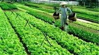 Kiểm tra tiến độ dự án vùng sản xuất rau an toàn ở TP Vinh