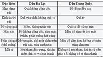 Nhận biết dâu tây Đà Lạt và dâu tây Trung Quốc