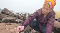 Nghề chập hàu đá ở biển Nghi Tiến
