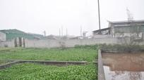 Ô nhiễm môi trường ở CCN Hưng Lộc – TP Vinh