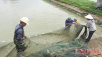 Trại cá giống Đô Lương: Cần công khai, minh bạch về việc làm tiền lương