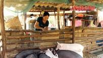 Những mô hình kinh tế hộ ở Chiêu Lưu