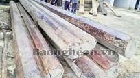 Điều tra, làm rõ vụ chặt phá 150m3 gỗ quý  ở Tam Hợp (Tương Dương)