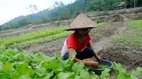 Quế Phong: Chuyên canh rau an toàn