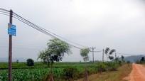 Mô hình trồng cây của thanh niên xã Hùng Sơn (Anh Sơn)