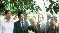 Hội thảo mô hình trồng cây bưởi Diễn và hệ thống tưới nhỏ giọt