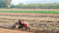 Giải pháp ổn định vùng nguyên liệu cho ngành mía đường