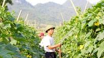 Xã Đồng Văn (Tân Kỳ): Vượt khó, giảm nghèo hiệu quả