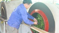 Hùng Sơn (Anh Sơn): Đa dạng hóa sản phẩm chè búp