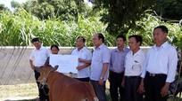 Mặt trận Tổ quốc tỉnh hỗ trợ hộ nghèo ở Anh Sơn